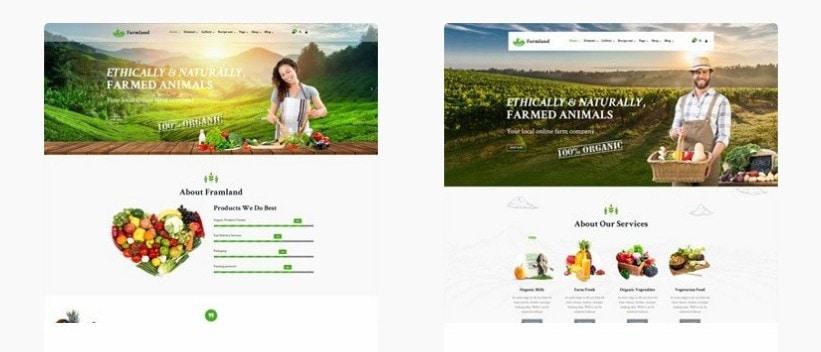 шаблон для магазина продуктов питания с ярким отзывчивым дизайном 5